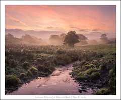 Autumn Morning at Pelcomb Beck (mistymornings99) Tags: mist stream lambston photostyles pelcombbrook weather colour camrose wales unitedkingdom gb