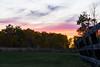 Sunset, Autumn Poplar Grove (Matt 23998) Tags: trees poplars sunset forest autumn fall fenceline poplar beausejour manitoba fence
