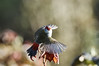 Morning Noise (OM-Digital) Tags: morning lights omd birding birdwatcher watch olympus digital iso noise highiso iso5000 f71 13200 420mm 300mm mzuiko pro