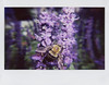 bumble_bee_flash (Judy M. Boyle) Tags: lomoinstantwide instant film photography mountvernon baltimoremd closeuplens
