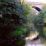 Water of Leith, autumn day 05 thumbnail