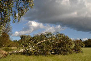 The day after the storm