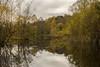 Reflections (jasty78) Tags: loch reflection autumn queenelizabethforestpark trossachs aberfoyle highlands scotland nikon d7200 sigma350mmf14