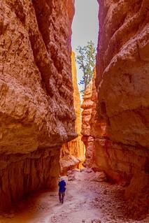 Among Giants. Bryce Canyon, Utah