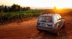 2012 Subaru Forester 2.5x (donaldgruener) Tags: dawn sh forester subaru subaruforester vineyard california sunrise