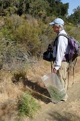 John near site of invasive *Dittrichia graveolens, STINKWORT along Road B (openspacer) Tags: dittrichia invasive jasperridgebiologicalpreserve john jrbp nonnative people stinkwort