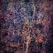 Forest Tree with Apples / Pommes d'automne