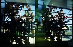 Asa 1001 (terencekeller) Tags: doubleexposure duplaexposição 2cameras1film 2câmeras1filme double exposition dupla exposição canon canondemiee17 demi ee17 canonetql17giii canonet ql17 giii 30mm 40mm halfframe meioquadro half meio kodak proimage terencekeller analogue epson v370 35mm film twocamerasonefilm duascâmerasumfilme