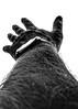 75 of 365: Reach (tainkeh) Tags: lamp elsinore october reach vein stretch pick desperate denmark help clock wrist hand drama spot helsingør 2017 silhuette arm 365 hair depth watch project365