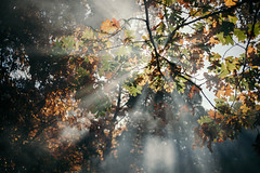 Tell Me That You Noticed (davelawrence8) Tags: 2016 autumn fall foliage home leaves light nature michigan usa