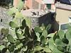 11 set 2017 - Vernazza (10) (Thelonelyscout) Tags: liguria tellaro porto venere vernazza lerici corniglia