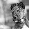 Aeila14Oct201745-Edit.jpg (fredstrobel) Tags: dogs pawsatanta phototype atlanta blackandwhite usa animals ga pets places pawsdogs decatur georgia unitedstates us