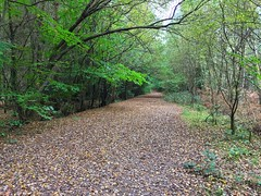 Autumn In The Forest (Marc Sayce) Tags: colours fall leaves autumn october 2017 alice holt forest hampshire wrecclesham farnham surrey south downs national park