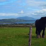 Head in the (Irish) Clouds #5 _ Postcard thumbnail