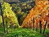 Lines (almresi1) Tags: vineyard weinberg trees bäume wald wood forest nature landscape herbst autumn fall leuchtend deep tiefe downunder beutelsbach remstal reihen colours mountains farben berg tal