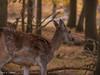 20171014-DSC_0610 (M van Oosterhout) Tags: amsterdamse waterleiding duine natuur nature flora fauna landschap landscape dutch holland amsterdam nederland netherlands animals