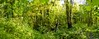 (05) Gerstjens Aalst-Erembodegem (Johnny Cooman) Tags: aalst vlaanderen belgië bel erembodegem natuur herfst ベルギー flemishregion flandre flandes flanders flandern belgium belgique belgien belgia autumn flora bélgica aaa flhregion panasonicdmcfz200 oostvlaanderen eastflanders vertorama bos forest forêt wald bosque otoño herbst automne pano panorama brug bridge pont brücke puente