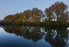 Poplar Autumn (Jorick77) Tags: tokinaatx116prodxii1116mmf28 meinerswijk landschap landscape poplar autumn arnhem d7200 nikond7200 populieren reflection