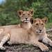 Mara Safari-0515.jpg