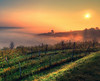 Secret analogies (Robyn Hooz) Tags: alchemy magia mattino nebbia alberi vicenza berici colli sole sunrise alba tyndall filari viti horizon orizzonte