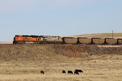 3G2A8028 (kschmidt626) Tags: powder river coal train wyoming bnsf union pacific sunset sunrise tier 4