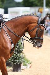 _MG_6113 (dreiwn) Tags: ridingarena reitturnier reiten reitplatz reitverein reitsport ridingclub equestrian showjumping springreiten horse horseback horseriding horseshow pferdesport pferd pony pferde tamronsp70200f28divcusd