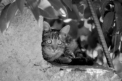 gatoula ii (georgios a.v.) Tags: monochrome blackandwhite minoltasrt101 vivitar70210mmseries1 slr mflenses kodakprotmax100 adoxaph01185 ilfordrapidfixer filmphotography nopp nopostprocessing
