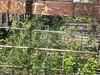 """Berlin-Nordbahnhof 33 (Abandoned-Stillgelegt Berlin) Tags: nordbahnhof berlinnordbahnhof 1896 berlinstellwerknoa stillgelegt bahn sbahn bahnhof schwartzkopffstrase carolinemichaelisstrase eisenbahn """"sbw nordbahnhof"""" """"bezirk mitte"""" berlinmitte gleise reiterstellwerk berlin deutschland dr grenze """"deutsche reichsbahn"""" germany railway railroad abandoned """"railway embankment"""" """"signal box"""" borderline"""