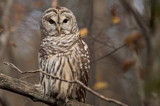 Happy Owl-O-Ween!!