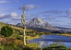 Mount Errigal Donegal Ireland. (Ken Finlay) Tags: mount errigal donegal ireland dunlewy gweedore poison glen derryveagh mountains 7 sisters peak seven