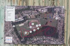 DSC_8803 (Adrian Royle) Tags: mansfield berryhillpark sport athletics running racing relays xc crosscountry ecca nationalcrosscountryrelays athletes runners action clubs park autumn nikon