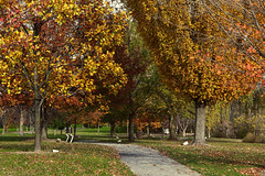 Autumn is really here (Millie Cruz) Tags: autumn lionslakepark lebanonpa path plaques memorial fall trees bench outdoors