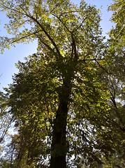 WP_20170916_12_32_22_Pro (vale 83) Tags: public garden pančevo serbia microsoft lumia 550 friends flickrcolour coloursplosion colourartaward wearejuxt wpphoto beautifulexpression autofocus