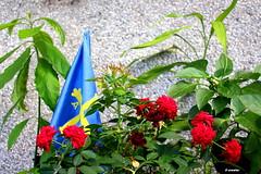 1.170 - ¡Asturias, patria querida! (esnalar) Tags: asturies asturias principaudasturies principadodeasturias paraísonatural españa spain bandera flag flores flowers rosas roses