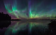 Autumn night sky (M.T.L Photography) Tags: auroraphotography nikond810 mikkoleinonencom mtlphotography night water trees stars sky nightscape northernlights auroraborealis autumnnightsky reflection
