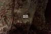 DSC01871 (cassolclaudio) Tags: montagna ferrata rio secco trento