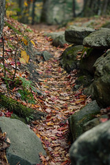 path to moss glen falls - granville, vt (laughlinc) Tags: autumn moss nikon mossglenfalls vermont nature laughlinc 105mm28 leaves path nikon7200 fall granville rocks