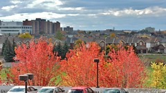 Autumn in Nepean (Will S.) Tags: mypics autumn fall nepean ottawa ontario canada