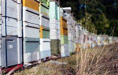 Hives (nEjmEd) Tags: hometown fomaequicolor bee