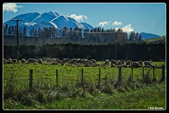 Sheep Grazing (PEN-F_Fan) Tags: mountains olympusmzuiko12100mmf40pro olympuspenf mirrorless landscape mft microfourthirds on1photoraw sky southernalps type sheep pencamera photoborder raw fence camera clouds southisland australia