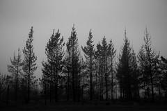 Chile | El cajon | Landscape (Medigore) Tags: añadir etiquetas mistery monocromático montañas mountain white forest tree medigore chile blanco y negro aire libre neblina cielo mist black campo canon