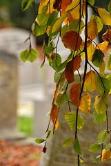 allerzielen (Don Pedro de Carrion de los Condes !) Tags: allerzielen traditie geloven religie grafsteen gedenken