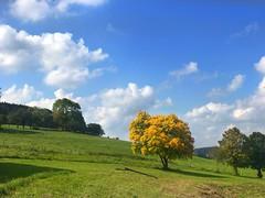 Vorbote des Herbst (Blende2,8) Tags: herbstfarben viehweide wald herbst baum bäume wolken himmel rinder vieh wiesen schwäbischealb schwabenland badenwürttemberg deutschland iphone