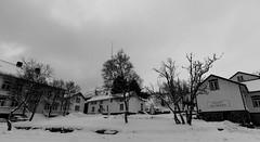 IMG_2602 (alessandro orfanù) Tags: norway lofoten vesteralen hurtigruten winter snow northernlight