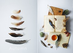 Autumnal Still-Life. (www.juliadavilalampe.com) Tags: feathers plumas otoño tea books still life spanisch deutsch español german libros