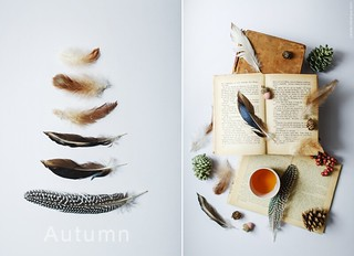Autumnal Still-Life.