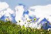 Mountain Summer (memories-in-motion) Tags: austria zillertal österreich gletscher alpen berge gipfel summit grün wiese meadow flowers blossom yellow sky air nature pure bokeh canon white blue summer