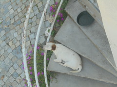 457 (en-ri) Tags: cagnolino little dog bianco stairs scale sony sonysti sonno sleep