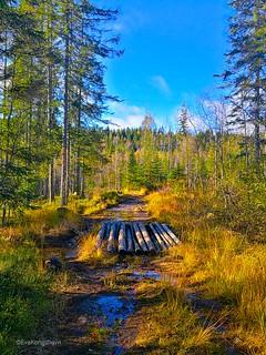 Volunteers making bridges deep in the forest