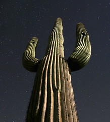Giant Saguaro and stars (JoelDeluxe) Tags: saguaro national park border crickethead inn tucson az arizona cacti landscape bednbreakfast nighttime long exposures stars wideopen skies joeldeluxe